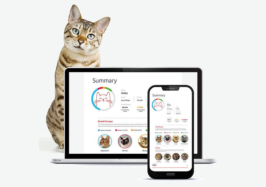 Basepaws Cat DNA Test
