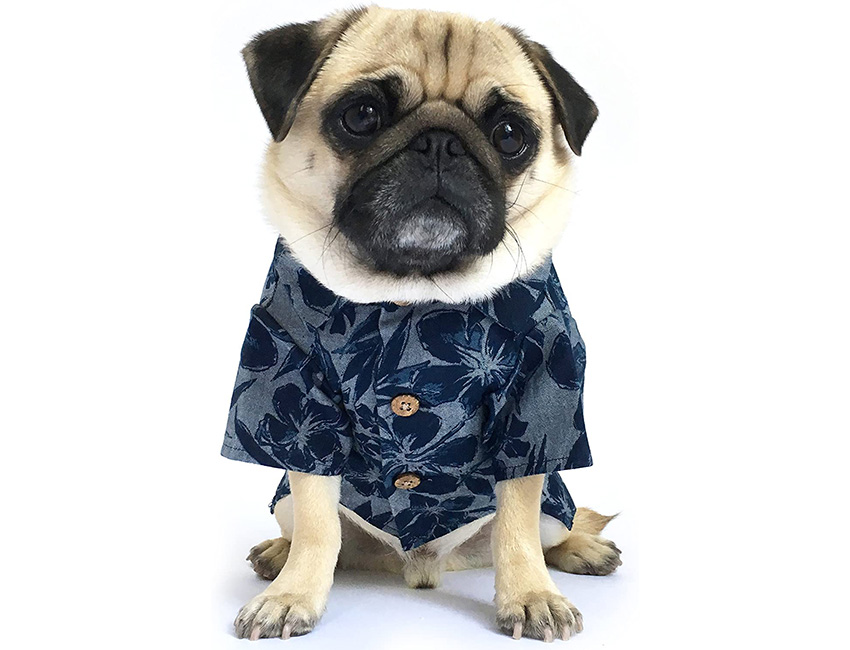 Dog Threads Clothes For Dogs and Owners
