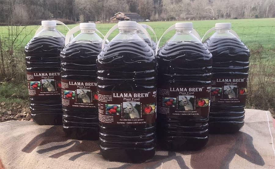 Llama Brew